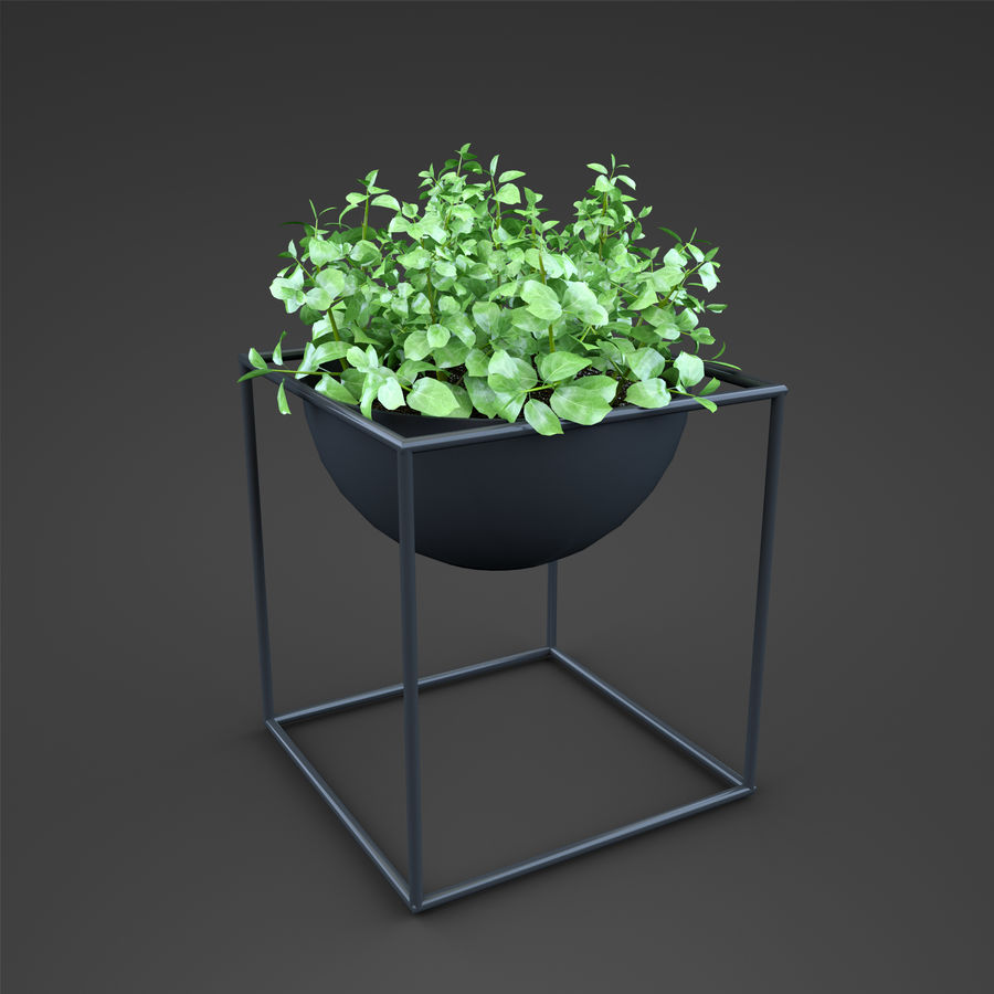 Set Home Plant royalty-free 3d model - Preview no. 29