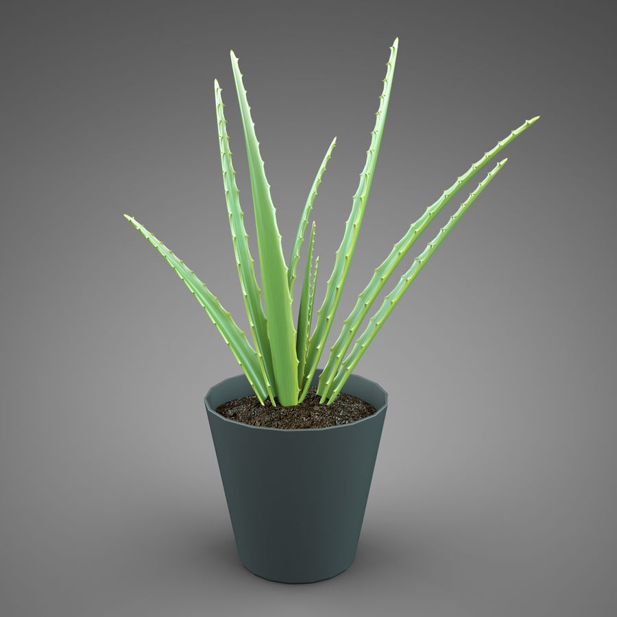 Set Home Plant royalty-free 3d model - Preview no. 15
