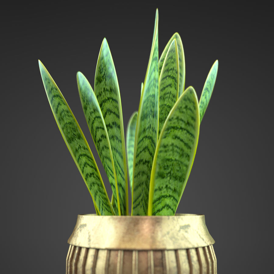 Set Home Plant royalty-free 3d model - Preview no. 12