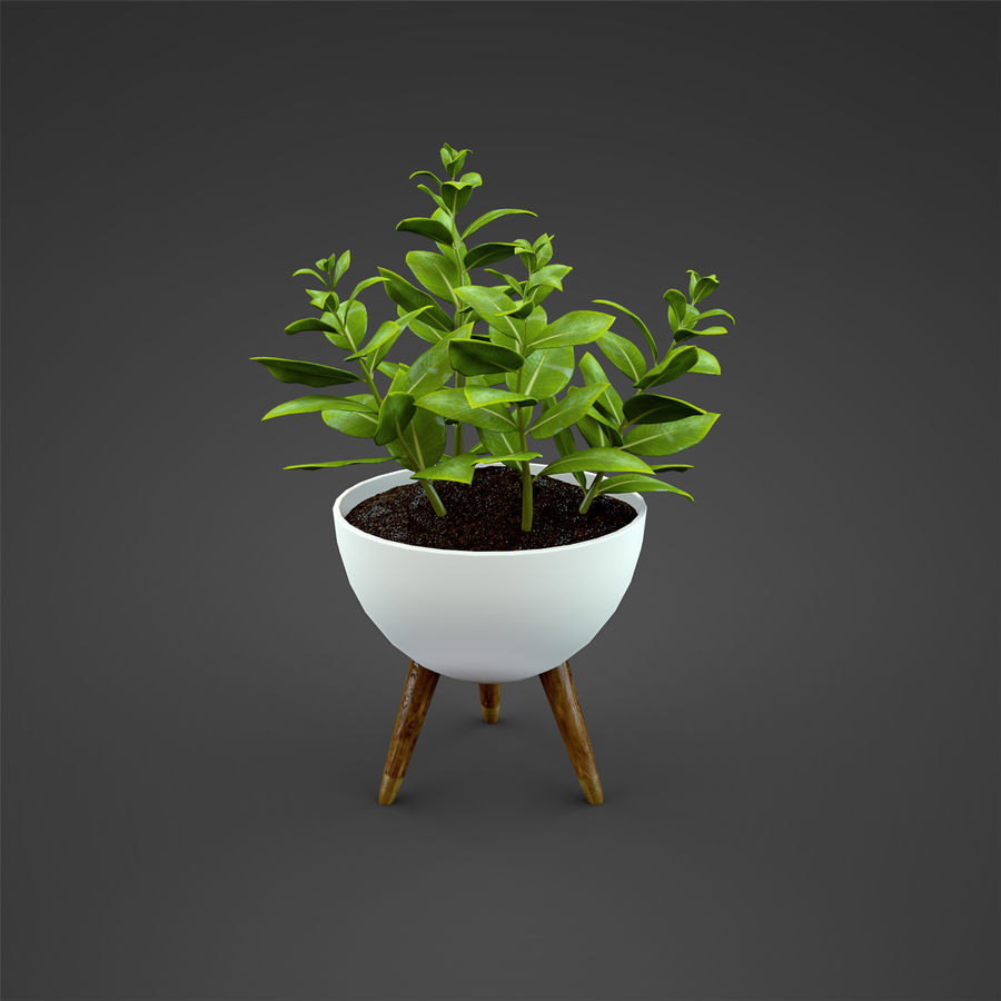 Set Home Plant royalty-free 3d model - Preview no. 21