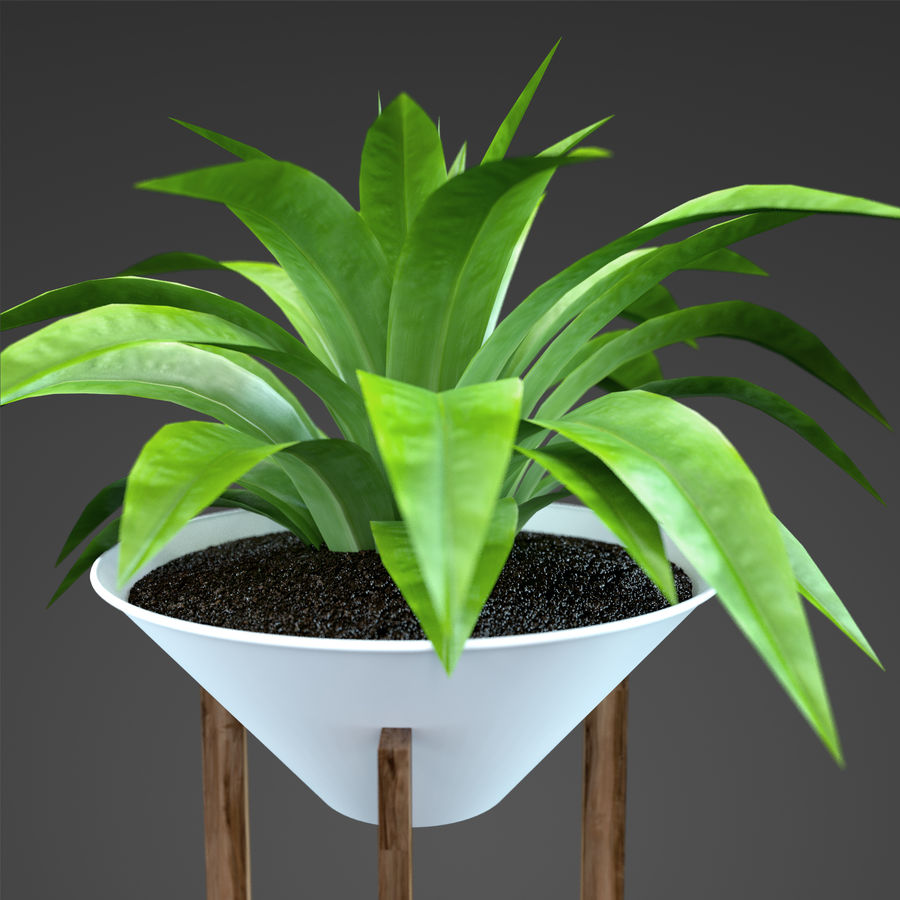 Set Home Plant royalty-free 3d model - Preview no. 36