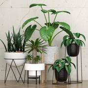 plante 27 3d model