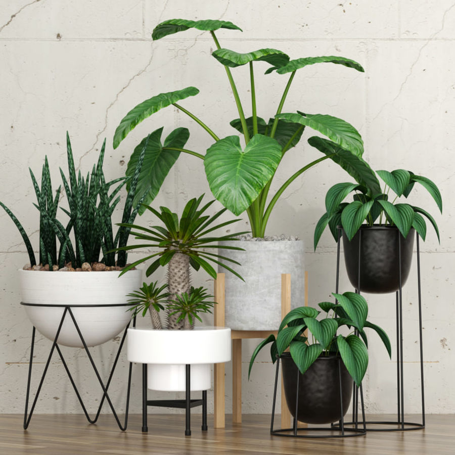 planta 27 royalty-free 3d model - Preview no. 1
