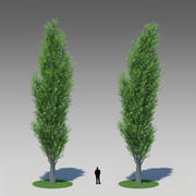 Populus Nigra 001 (+ same with wind bend) 3d model