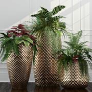Room plants 11 3d model