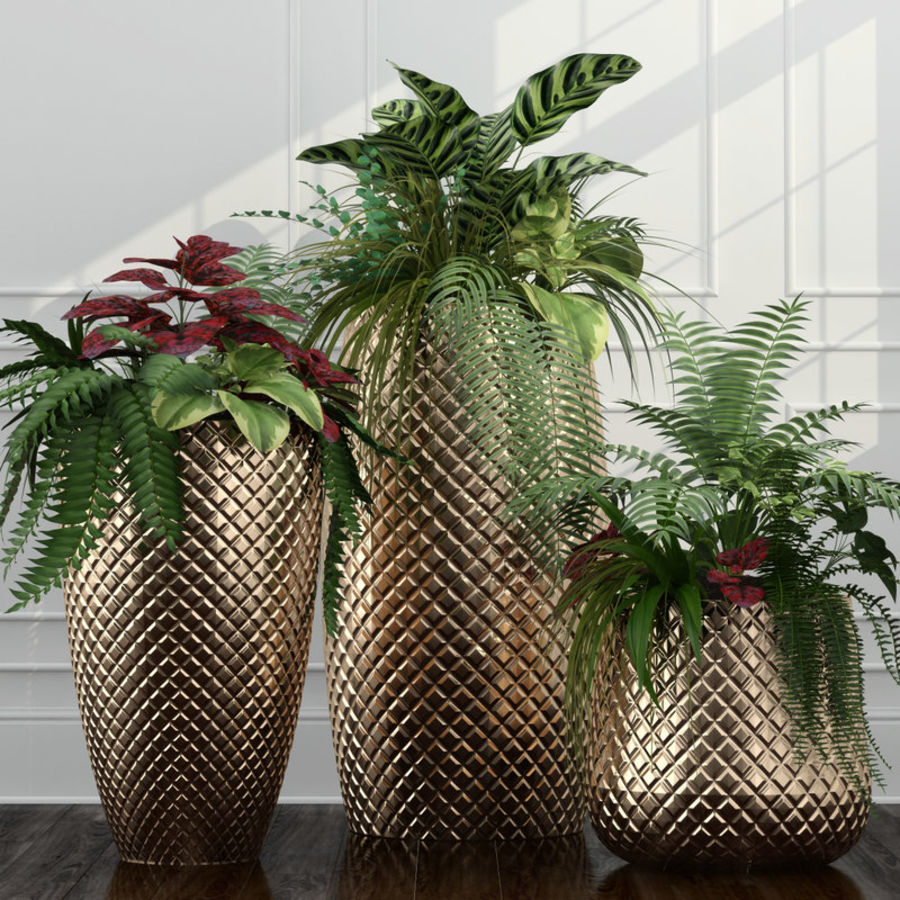 Room plants 11 royalty-free 3d model - Preview no. 1