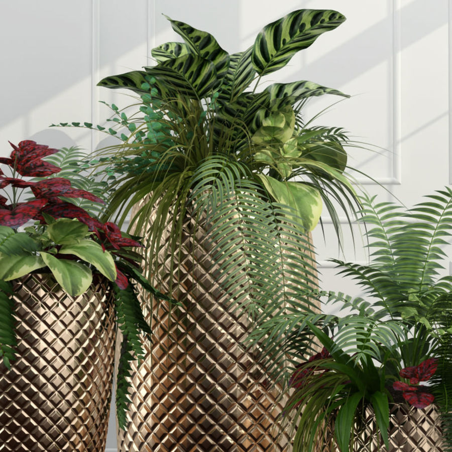 Room plants 11 royalty-free 3d model - Preview no. 5