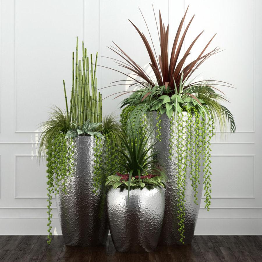 Rośliny pokojowe 12 royalty-free 3d model - Preview no. 1