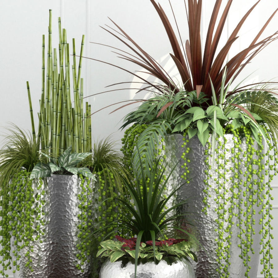 Rośliny pokojowe 12 royalty-free 3d model - Preview no. 5