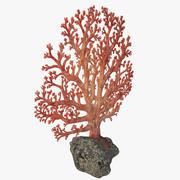 fan coral 3d model