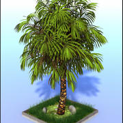 Large Palm Tree 3d model