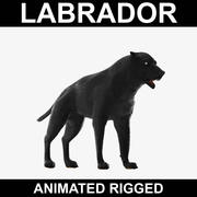 Labrador (Animated Rigged) 3d model