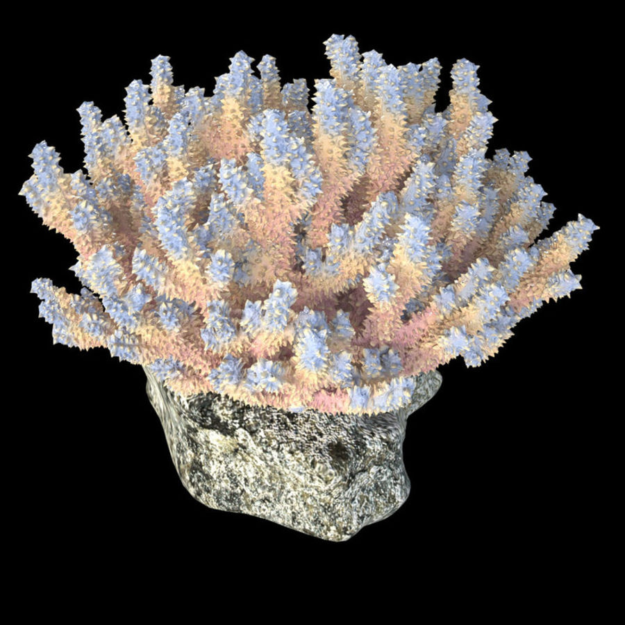 coral acropora_v2 royalty-free 3d model - Preview no. 4