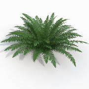 Realistic bush sword fern 3d model