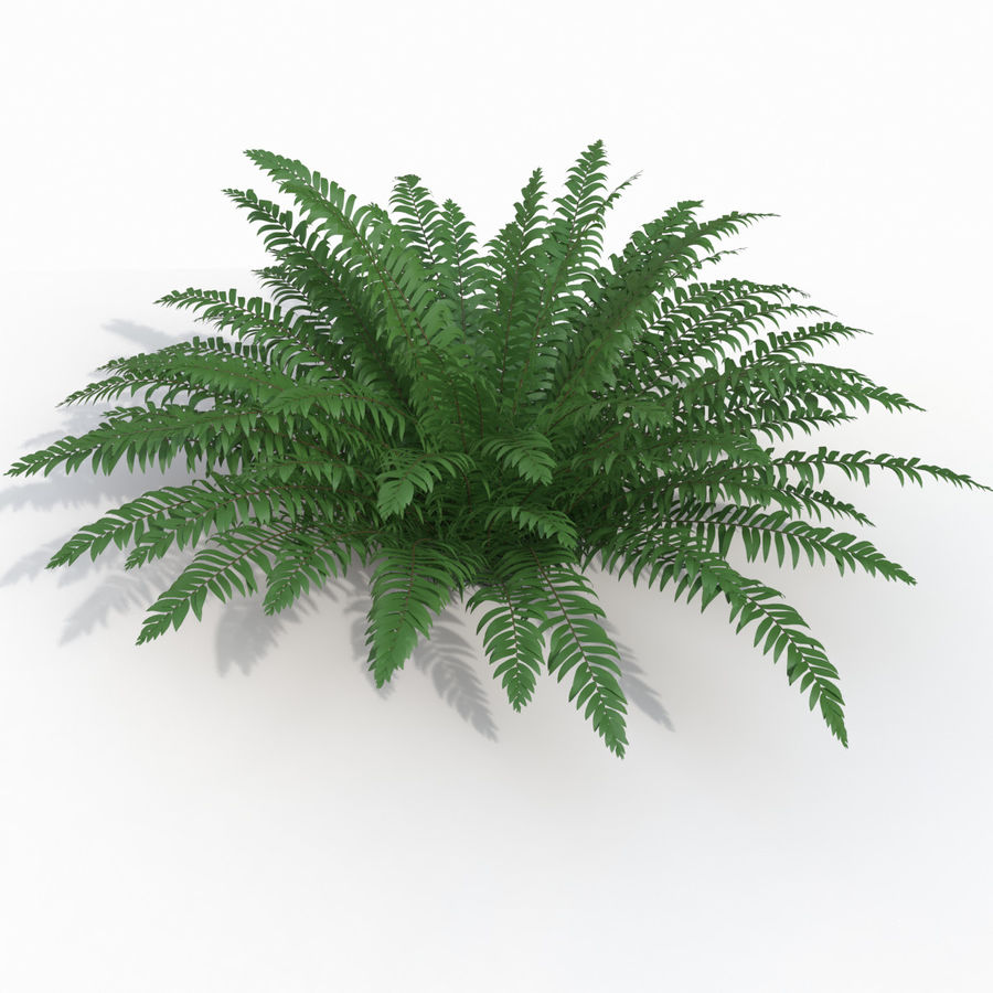 Realistic bush sword fern royalty-free 3d model - Preview no. 1