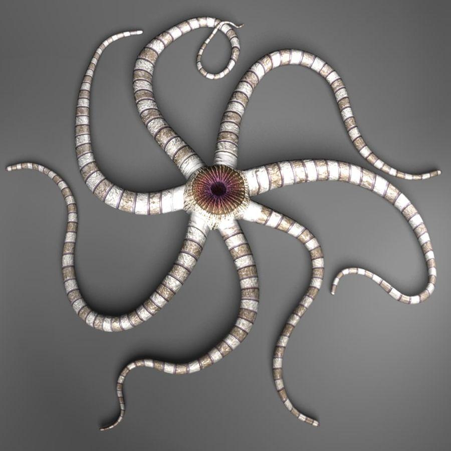 海星生物 royalty-free 3d model - Preview no. 2