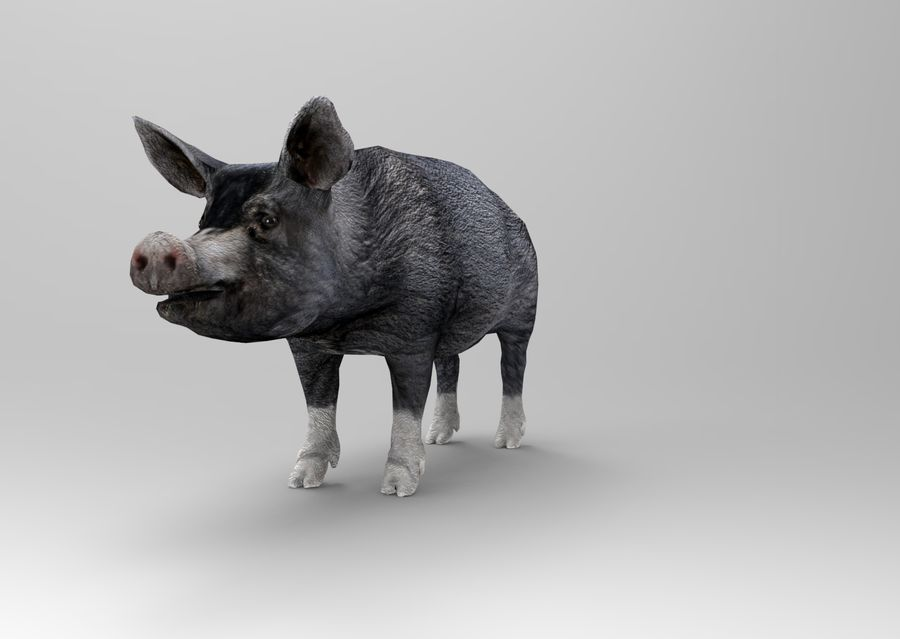 pig royalty-free 3d model - Preview no. 10