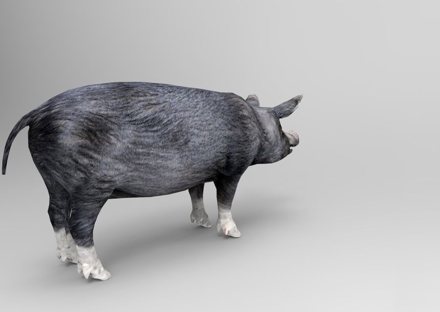 pig royalty-free 3d model - Preview no. 5