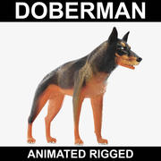 Doberman (Animated Rigged) 3d model