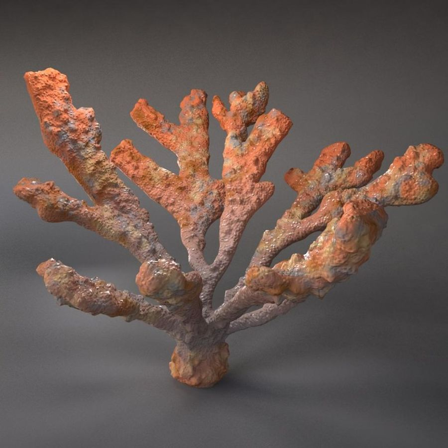 corail elkhorn royalty-free 3d model - Preview no. 3