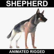 German Shepherd (Animated Rigged) 3d model