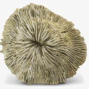 버섯 산호 3d model
