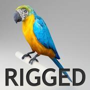 Ara parrot rigged 3d model