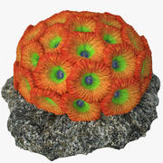 honeycomb coral_v1 3d model