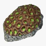 honeycomb coral_v2 3d model