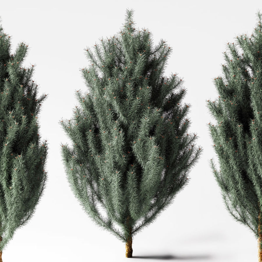 Pine Tree royalty-free 3d model - Preview no. 1