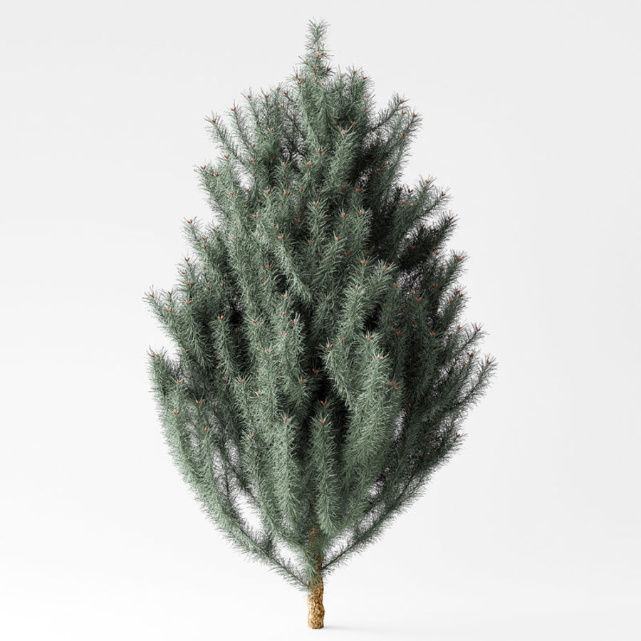 Pine Tree royalty-free 3d model - Preview no. 2