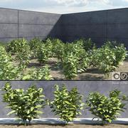 Japońskie rośliny laurowe (Aucuba) 3d model