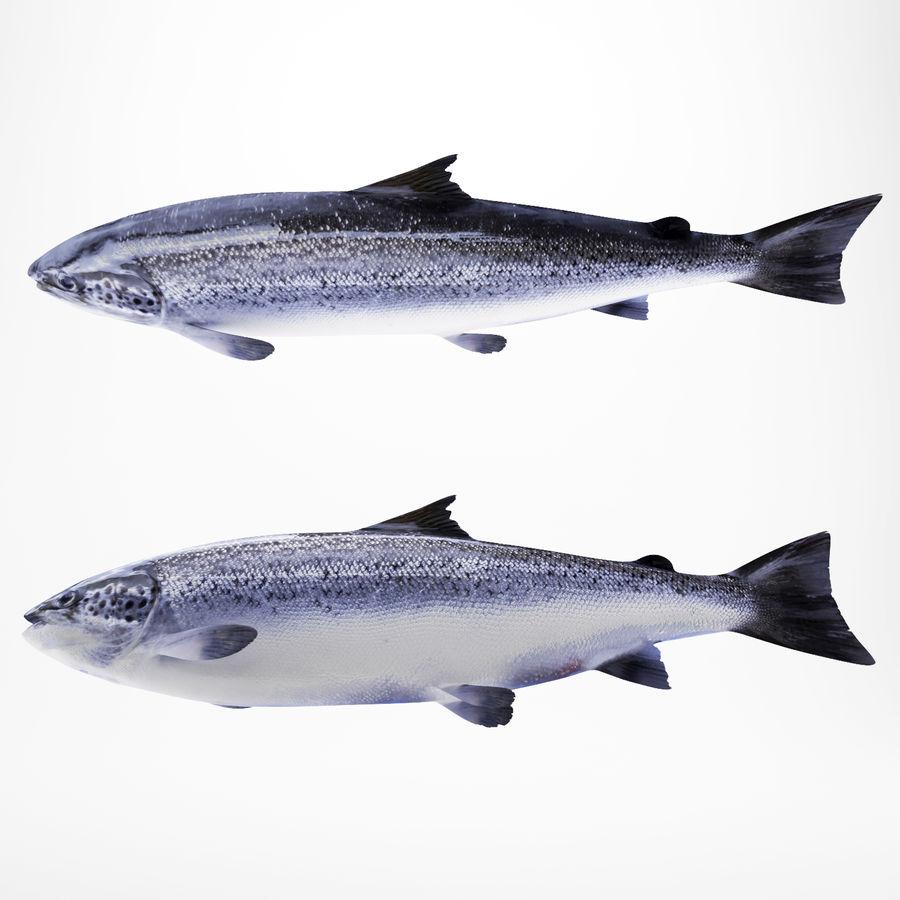 Truta de salmão royalty-free 3d model - Preview no. 4