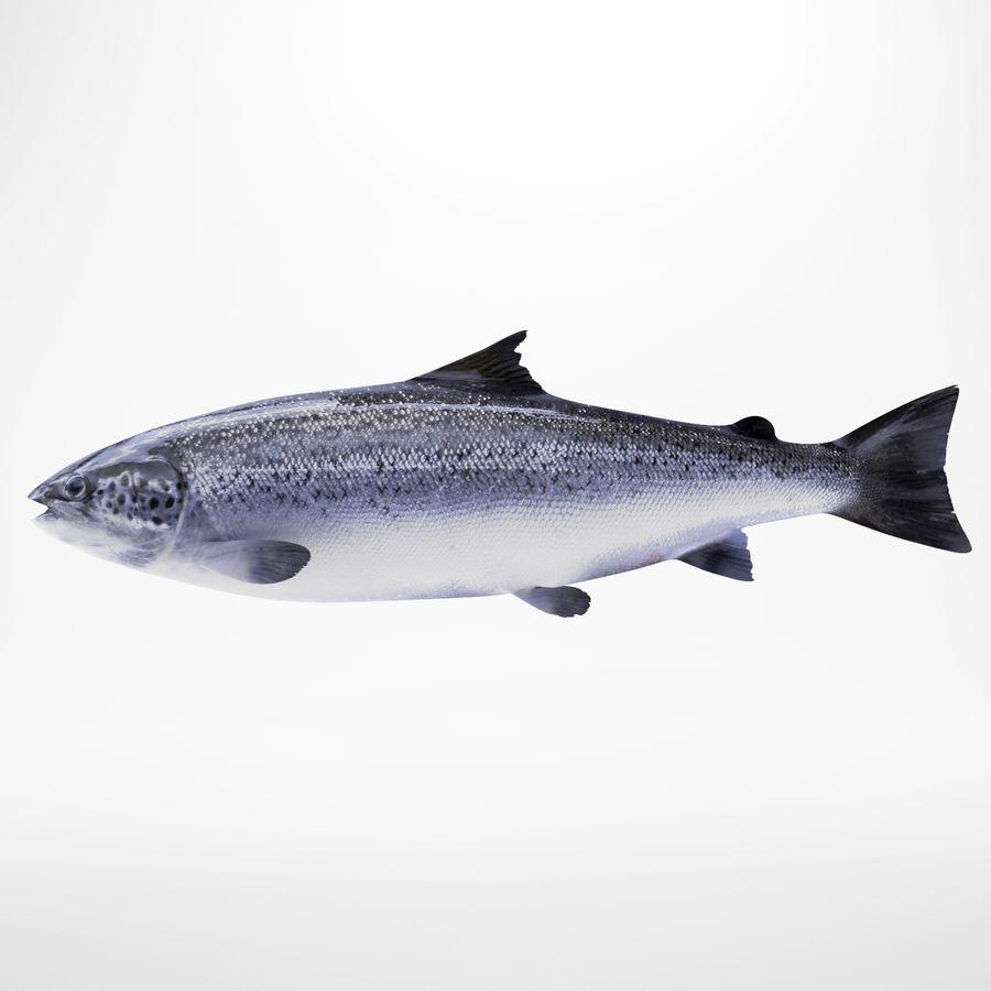 Truta de salmão royalty-free 3d model - Preview no. 1