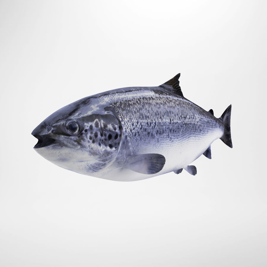 Truta de salmão royalty-free 3d model - Preview no. 2