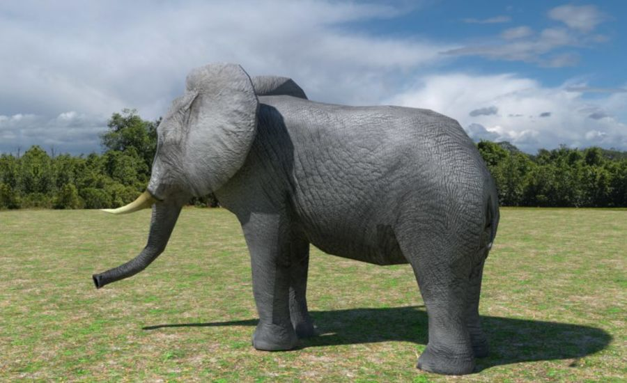 African Elephant Low Poly royalty-free 3d model - Preview no. 4