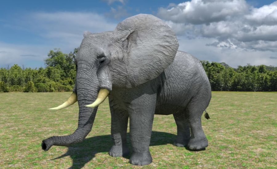 African Elephant Low Poly royalty-free 3d model - Preview no. 7