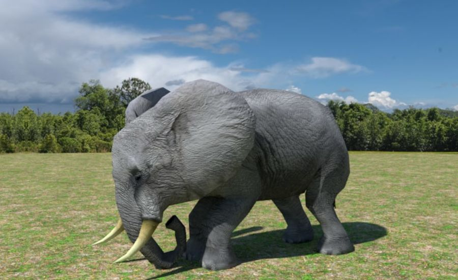 African Elephant Low Poly royalty-free 3d model - Preview no. 6