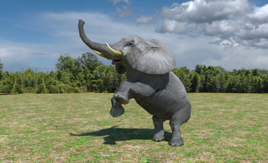 African Elephant Low Poly royalty-free 3d model - Preview no. 3