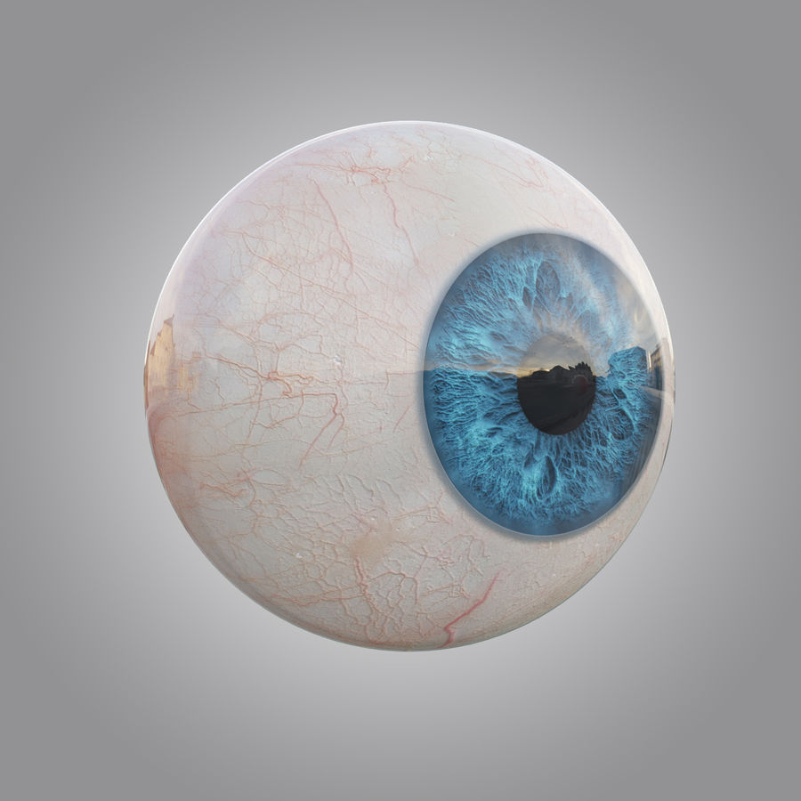Human blue eye royalty-free 3d model - Preview no. 5