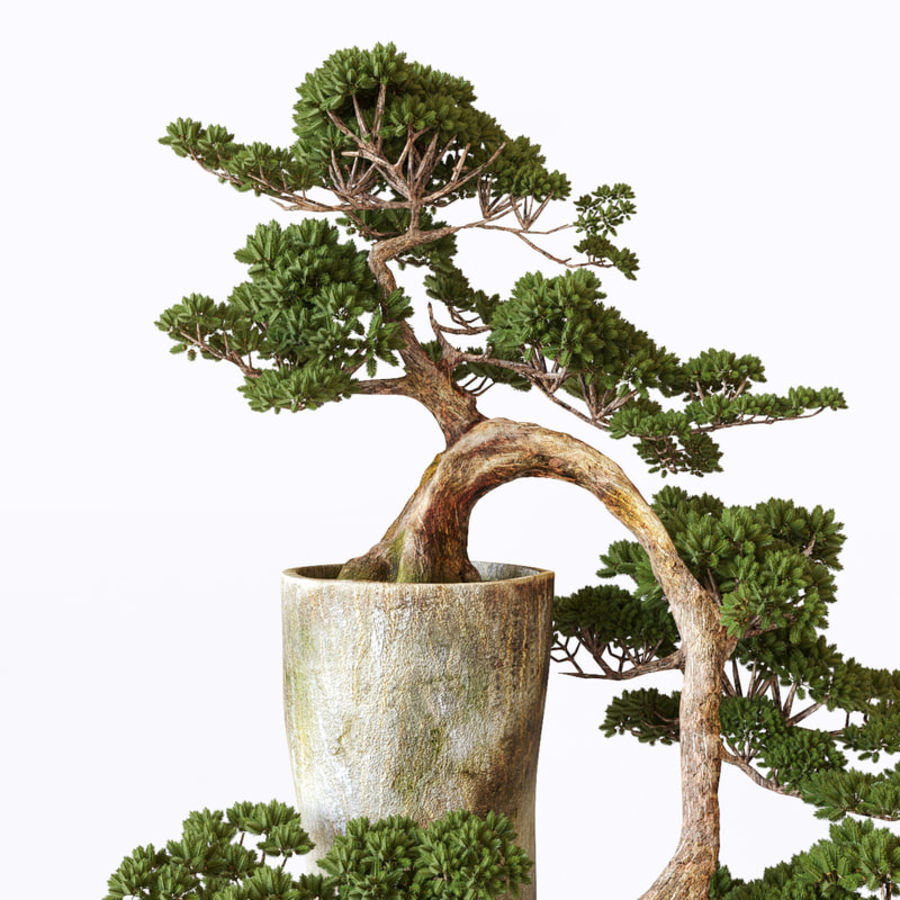 Bonsai royalty-free 3d model - Preview no. 5