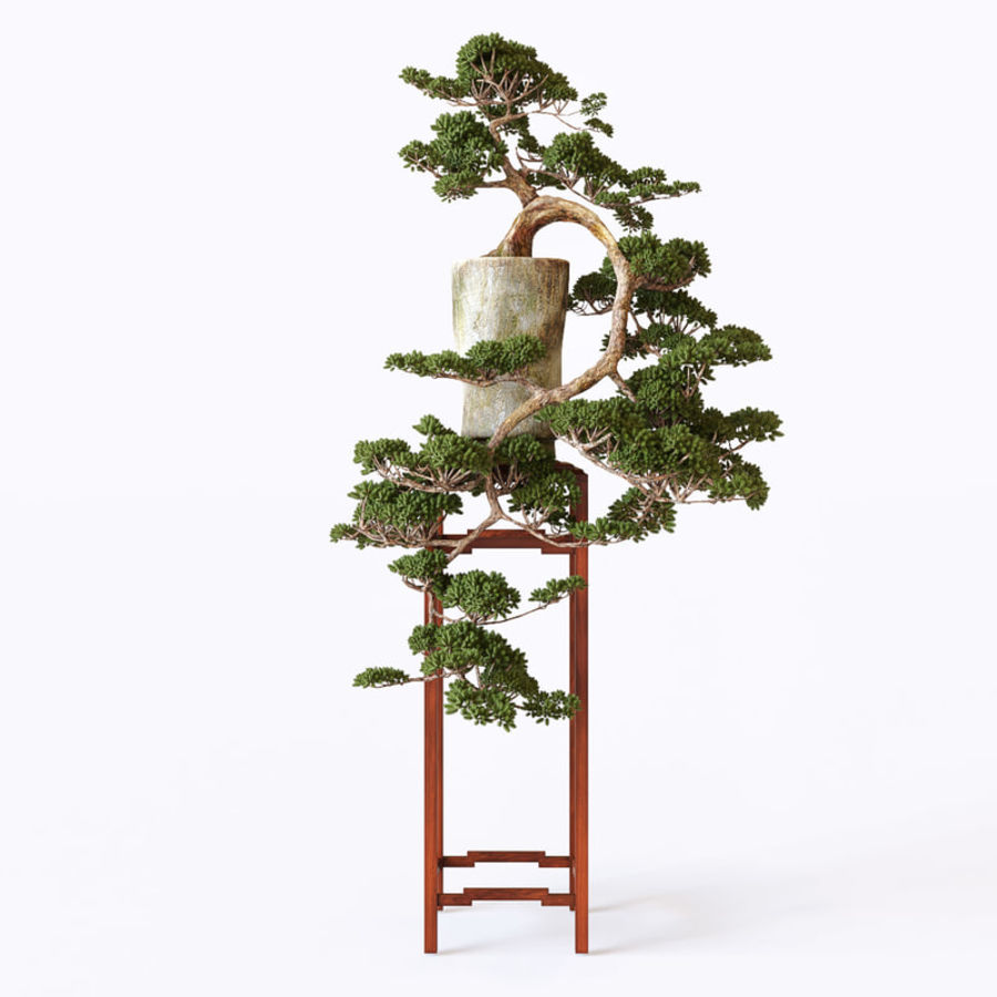 bonsai royalty-free 3d model - Preview no. 2
