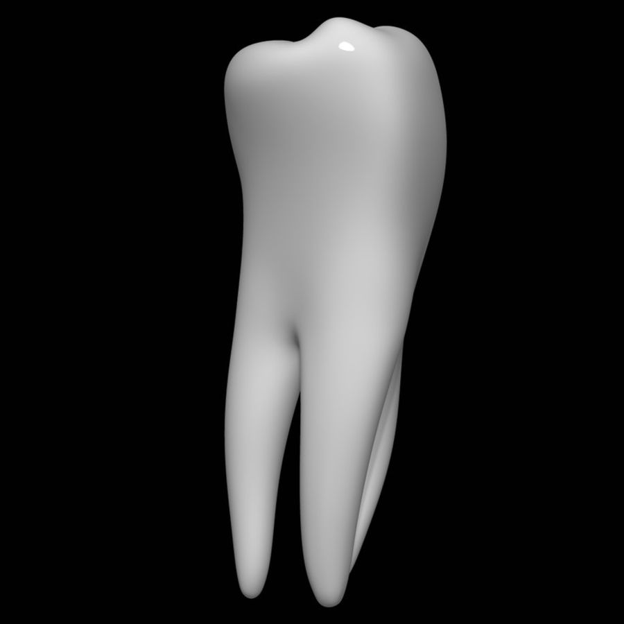 Tooth molar royalty-free 3d model - Preview no. 3