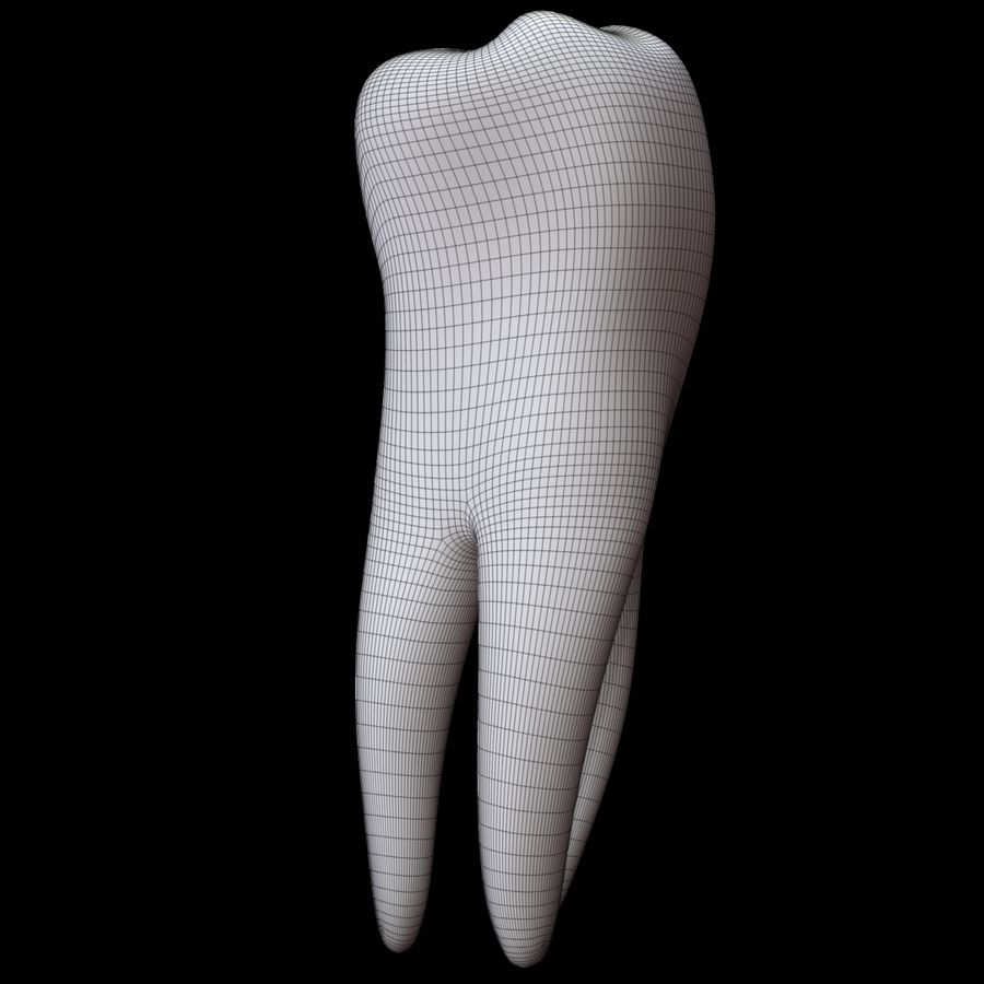 Tooth molar royalty-free 3d model - Preview no. 10