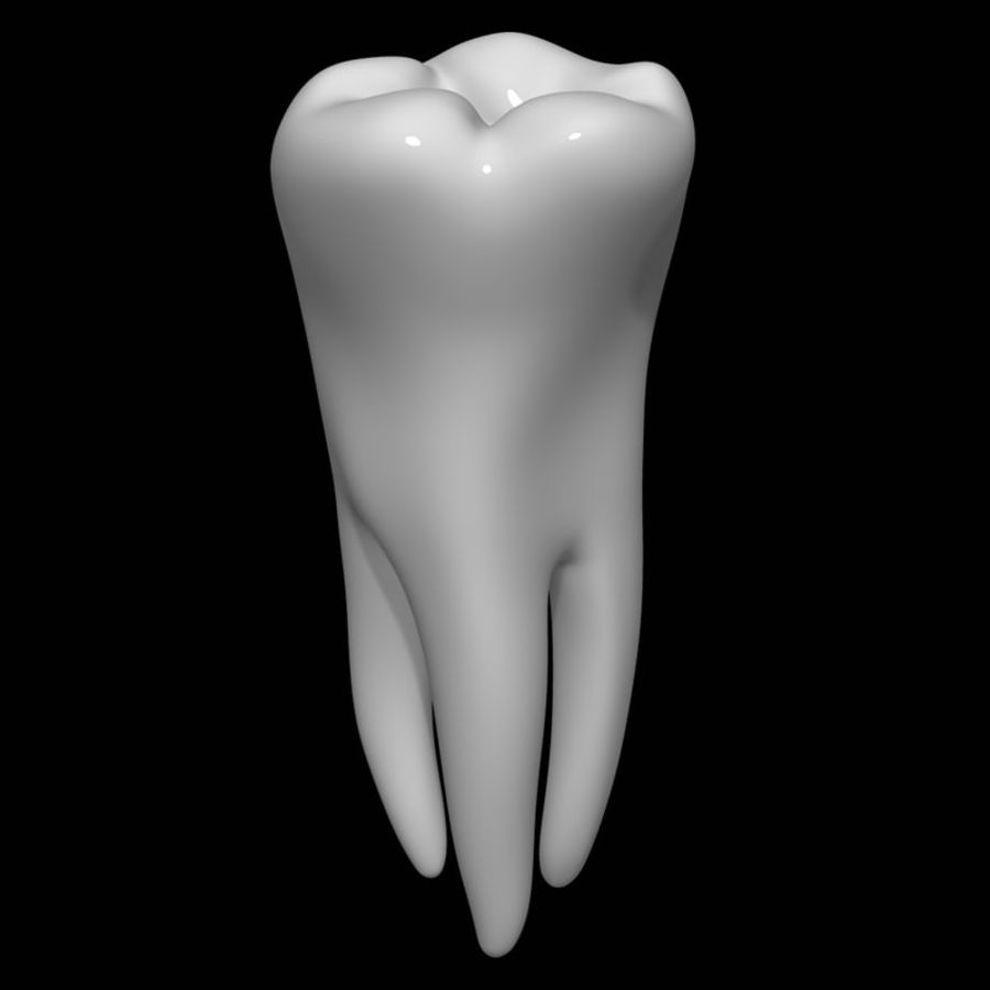 Tooth molar royalty-free 3d model - Preview no. 1
