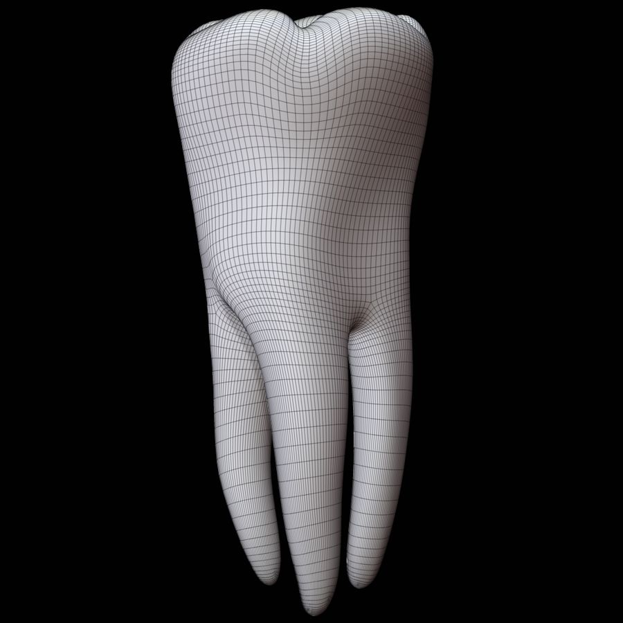 Tooth molar royalty-free 3d model - Preview no. 9