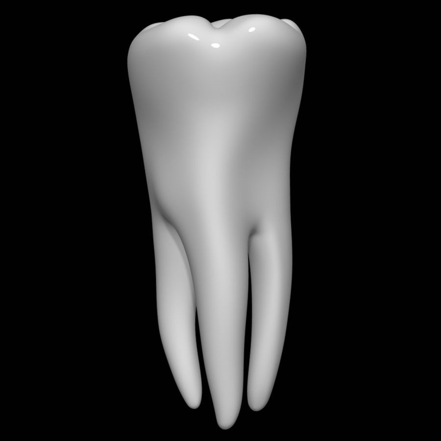 Tooth molar royalty-free 3d model - Preview no. 2