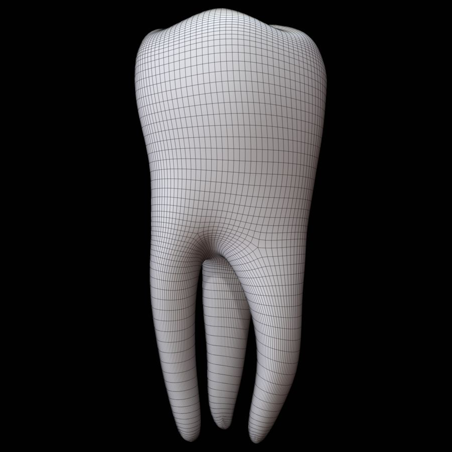 Tooth molar royalty-free 3d model - Preview no. 11