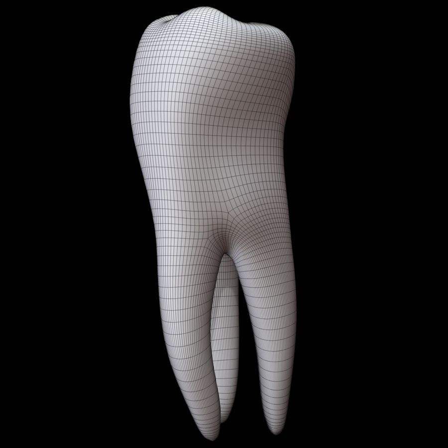 Tooth molar royalty-free 3d model - Preview no. 12