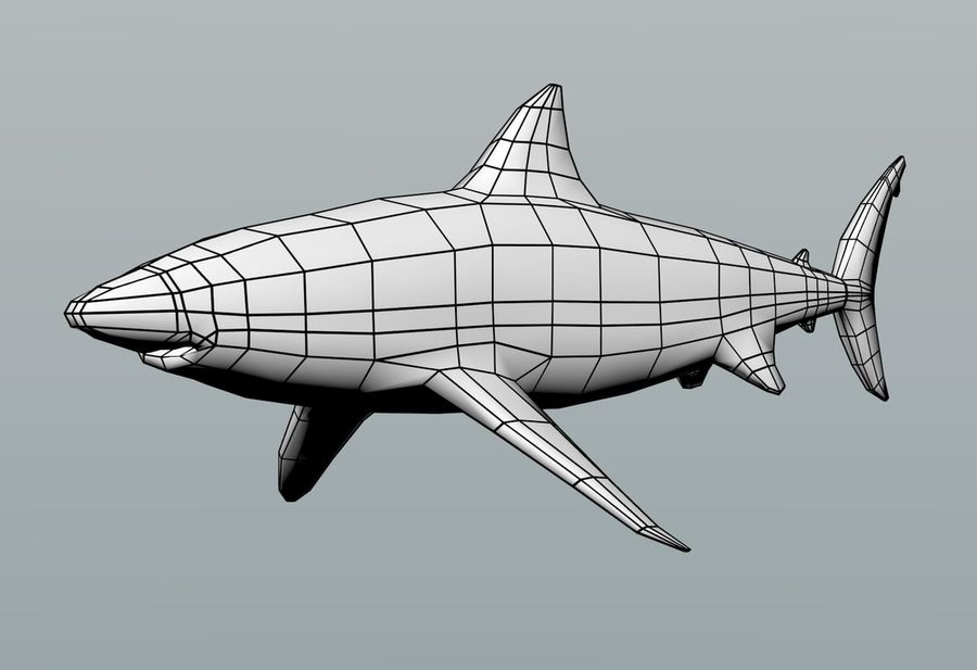 Shark Low Poly royalty-free 3d model - Preview no. 5